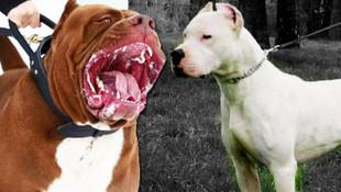 Valilik yasakladı ! Bu köpekleri besleyenlere 780 TL ceza
