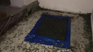 Sınır kapısında su kaplumbağası operasyonu