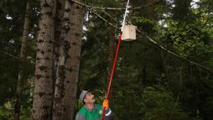 Bakanlık 14,5 milyon böceği ormana bıraktı