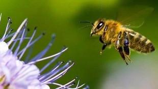 Arılar işçilere saldırdı! 19 kişi hastanelik oldu