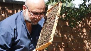 Bu arılar sokmuyor ! Yurt içi ve yurt dışına satıyor