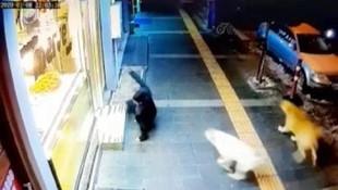 Sokak köpekleri vatandaşın kabusu oldu