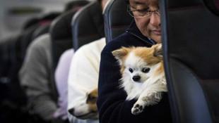 Evcil hayvanlara yolculuk izni çıktı!