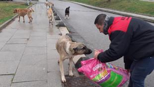 Maltepe sokak hayvanlarını unutmadı! Tam 500 kilo mama dağıtıldı