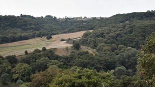 Danıştay tek bir kararla 180 bin ağacı kurtardı!