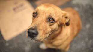 Hayvan hakları yasasının detayları belli oldu ! 10 bin TL ceza geliyor