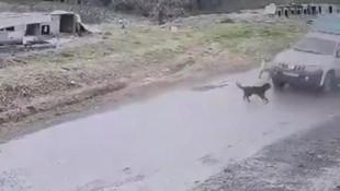Köpeği ezen belediye çalışanı işten atıldı ! O anlar kamerada