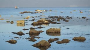Elazığ'da depremin ardından Balıkesir'de deniz çekildi