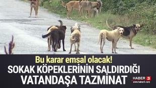 Sokak köpeklerinin saldırdığı vatandaşa tazminat!