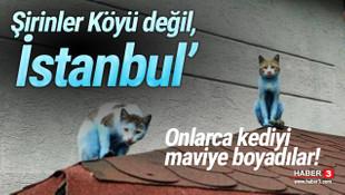Bu görüntüler İstanbul'da çekildi! Tepki yağıyor