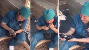 Ölü doğan 4 yavru köpeği böyle hayata döndürdü