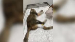 Elleriniz kırılsın! Çok sayıda kedi, fare zehriyle öldürüldü