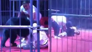 Sirkte gösteri yapan ayı terbiyecisine saldırdı
