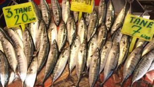 Balık hallerinde palamut bolluğu yerini kıtlığa bıraktı