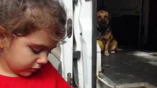 Antalya'da dehşete düşüren olay! 3,5 yaşındaki çocuk sokak köpeğini severken...