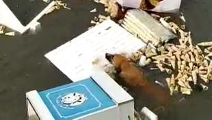 Talihsiz köpeğin İzmir'deki tsunamiden kurtulma anı kamerada
