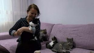 58 yaşındaki kadın 170 kediye bakıyor!