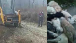 Bursa'da vahşet! 20'den fazla köpek katledildi