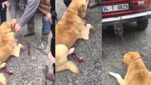 Köpeği otomobilinin arkasına bağlayıp yerde sürükledi