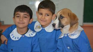 Türkiye onları konuşuyor: Fındık köpek, okula başladı!