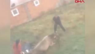 Hangisi hayvan ? Görülmemiş işkence ''geber'' diye dövüp kesti!