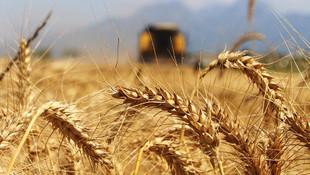 Suriye'den tonlarca buğday ithal edilecek
