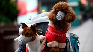 Köpeğe koronavirüs karantinası