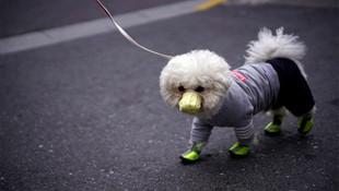 Koronavirüste ilk köpek ölümü yaşandı