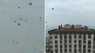 İzmir'de korkutan görüntü: ''Gözlerime inanamadım''