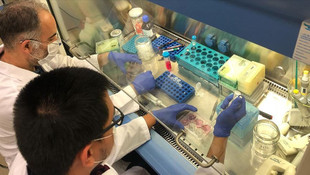 Bilim adamları koronavirüsün zayıf noktasını buldu