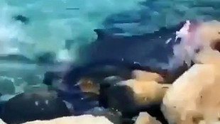 Canavar kamerada! Köpekbalığı kendini karaya fırlattı!