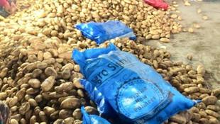 CHP'li Gürer: İthal patates yerli üreticiye en büyük kötülük