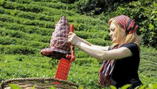 Çay üreticileri, yeni çay taban fiyatlarını olumlu karşıladı