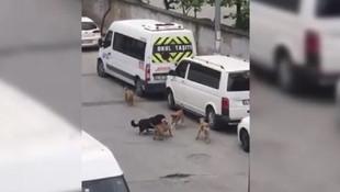 İstanbul'da köpekler kadına saldırdı