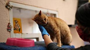 Şoke eden iddia! Evcil hayvanlara koronavirüs bulaştı