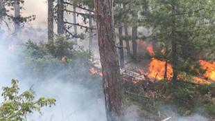 Uşak'ta orman yangını! Havadan ve karadan müdahale ediliyor