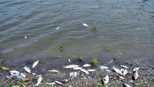 Barajdaki balık ölümlerinin sırrı çözüldü