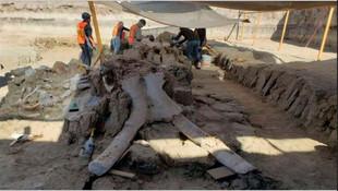 Havalimanı inşaatında 15 bin yıllık mamut kemikleri bulundu