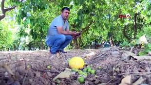 Afrika sıcakları cebi de yaktı! ''Portakal ve zeytini pahalıya yiyeceğiz''