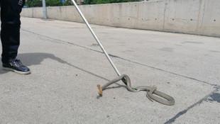Halk otobüsünden 2 metrelik yılan çıktı!