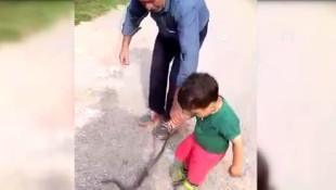 Görenler hayrete düşüyor! 3 yaşındaki çocuk yılanla böyle oynadı