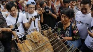 Çin'de tepki çeken köpek eti festivali başladı