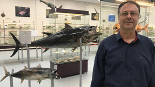 Somon balığından koronavirüs bulaşır mı?