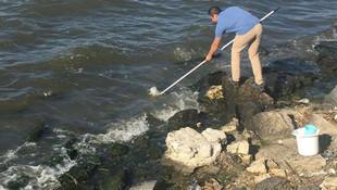 İstanbul'da binlerce balık ve yengeç karaya vurdu