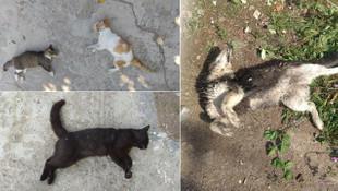 Hayvan katliamının yaşandığı İpsala ayağa kalktı!