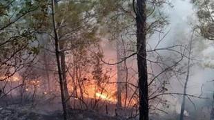 Antalya Serik'te korkutan orman yangını