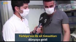Türkiye'nin ilk nil timsahları dünyaya geldi