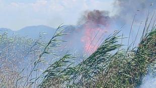 İznik'te sazlık alanda yangın!