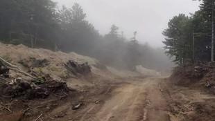 Uludağ'da katliam var! Bin 500'e yakın ağaç kesildi