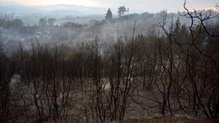 Ciğerlerimiz yandı! Gelibolu'daki yangının bilançosu açıklandı